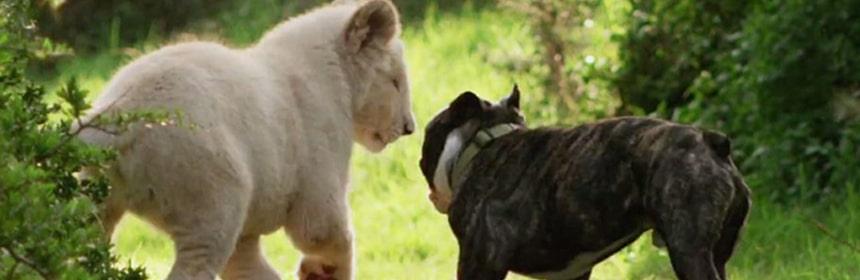 Dog and Lion