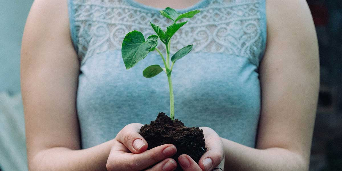 holding-growing-plant in hands